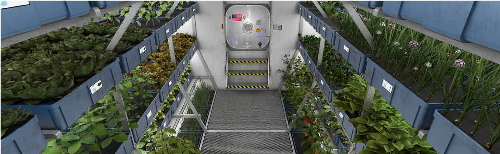 Food in space production
